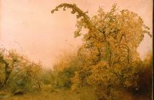 Click for a larger image of The Old Pear Tree