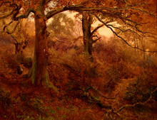 Click for a larger image of Autumnal Woodland