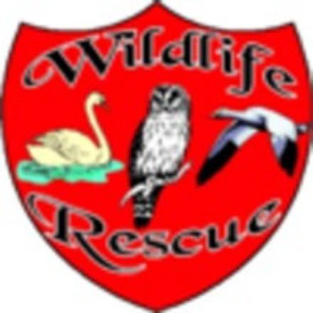 A picture for Wildlife-Rescue-Sailsbury