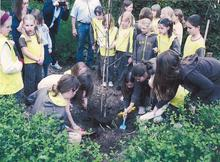 Image 1 for 2nd Winterbourne Brownies